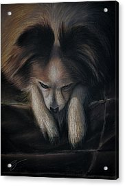 Waiting For Bed - Pastel Acrylic Print by Ben Kotyuk