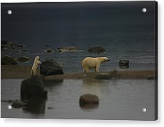Acrylic Print featuring the photograph Waiting For Cub Number 2 by Ben Shields
