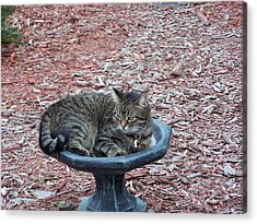 Acrylic Print featuring the photograph Waiting For Dinner by Michele Kaiser