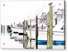 Waiting For Food - Outer Banks Acrylic Print by Dan Carmichael