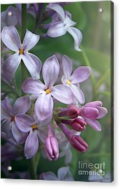 Waiting For Lilacs Acrylic Print