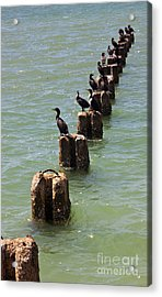 Waiting For Lunch To Arrive At The Sushi Bar Acrylic Print