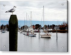 Waiting For Sandy Acrylic Print
