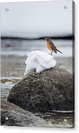 Waiting For Spring Acrylic Print by Bill Wakeley