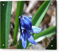 Waiting For Spring Acrylic Print by McKenna Konze