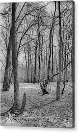Waiting For Spring Acrylic Print by Thomas  MacPherson Jr