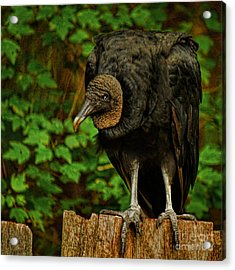 Waiting For Supper Acrylic Print