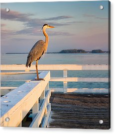 Waiting For The Fishing Boats To Arrive Acrylic Print
