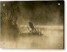 Acrylic Print featuring the photograph Waiting For The Sun by Steven Sparks