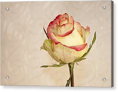 Acrylic Print featuring the photograph Waiting For The Unfurling by Sandra Foster
