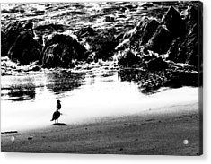 Waiting For Their Meal Black And White Acrylic Print