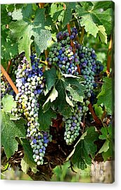 Waiting For Wine Acrylic Print by Carol Groenen