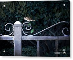 Waiting For Your Call Acrylic Print by Ellen Cotton