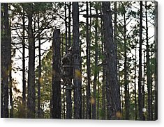 Waiting Game Acrylic Print by Jessica Brown