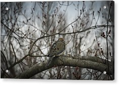 Acrylic Print featuring the photograph Waiting On Spring by Phil Abrams