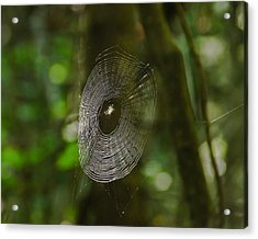Waiting On The Web Acrylic Print