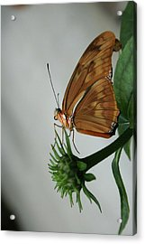 Acrylic Print featuring the photograph  Butterfly Waiting On The Wind  by Cathy Harper