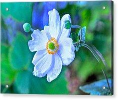 Flower 13 Acrylic Print