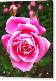 Wake Up And Smell The Roses Acrylic Print