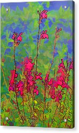 Wake Up Smell The Flowers Acrylic Print by Linda Phelps