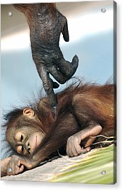 Wakeup Little One Acrylic Print by Sue Cullumber