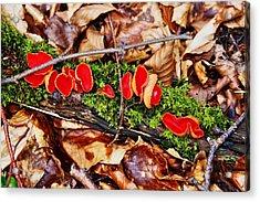 Walk In The Woods Acrylic Print by Aidan Moran