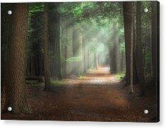 Walk In The Woods Acrylic Print by Bill Wakeley