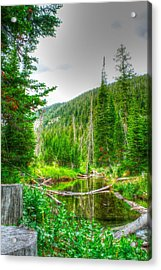 Acrylic Print featuring the photograph Walk In The Woods by Kevin Bone