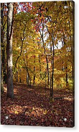 Walk In The Woods - Vertical Acrylic Print