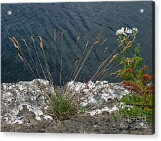 Acrylic Print featuring the photograph Flowers In Rock by Brenda Brown