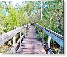 Walk This Way Acrylic Print by Judy Via-Wolff