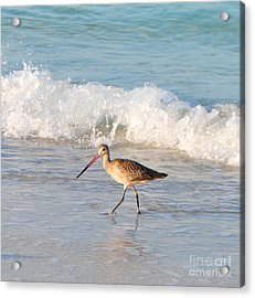 Walk This Way Acrylic Print by Margie Amberge