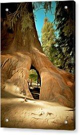 Walk Through Giant Sequoia Tree Acrylic Print by Barbara Snyder