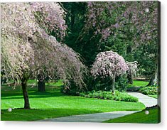 Acrylic Print featuring the photograph Walk Under The Cherry Blossoms by Sabine Edrissi