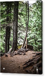 Walk With Me Acrylic Print by Aaron Aldrich