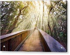 Walk With Me Acrylic Print by Debra and Dave Vanderlaan