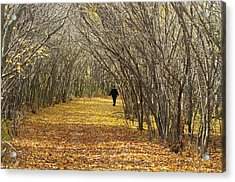 Walking A Golden Road Acrylic Print