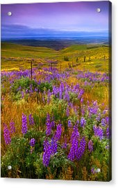 Walking Along The Fence Line Acrylic Print by Darren  White