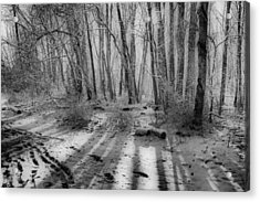 Walking  Amongst Shadows Acrylic Print by Thomas  MacPherson Jr