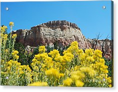 Acrylic Print featuring the photograph Walking Ghost Ranch by William Wyckoff