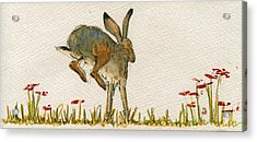 Walking Hare Acrylic Print
