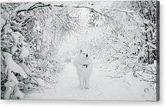 Walking In A Winter Wonderland Acrylic Print