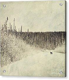 Walking Luna Acrylic Print by Priska Wettstein
