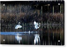 Walking On Water Acrylic Print by Paulette Thomas