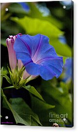 Walking Through A Dream  I See You  - I Pray In My Heart That This Dream Never Ends  . Acrylic Print