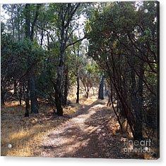 Walking Trail Acrylic Print