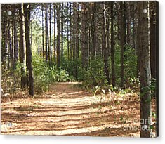 Walking Trail Acrylic Print by Margaret McDermott