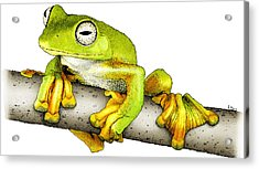 Wallaces Flying Frog Acrylic Print by Roger Hall