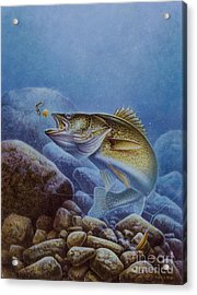 Walleye And Lindy Acrylic Print by Jon Q Wright