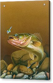 Walleye And Spinner Jig Acrylic Print by Jon Q Wright